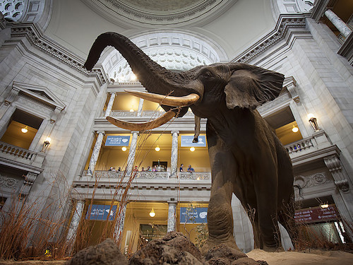 Smithsonian-Museum-Washington-DC