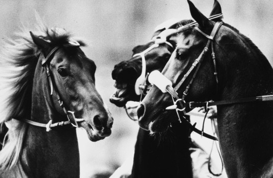 Francesco Cito, Palio di Siena, primo premio al World Press Photo nel 1996